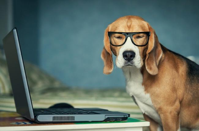 Собака в очках у компьютера